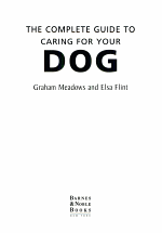 The Complete Guide to Caring for Your Dog