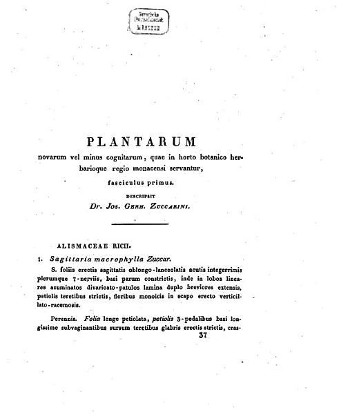 Plantae novae vel minus cognitae quae in horto botanico herbarioque regio Monacensi servantur
