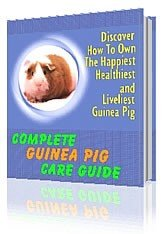 The Complete Guinea Pig Care Guide
