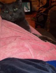 Mornink Meetink Minuteys By Stellaluna The Cat Book PDF