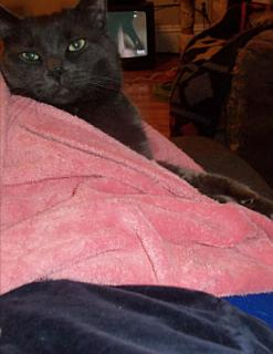 Mornink Meetink Minuteys By Stellaluna The Cat Book