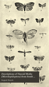 Descriptions of tineoid moths (Microlepidoptera) from South America