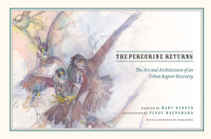 The Peregrine Returns