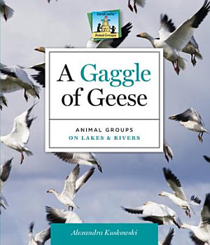 Gaggle of Geese Animal Groups on Lakes   Rivers PDF
