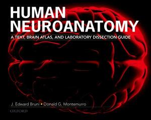 Human Neuroanatomy PDF