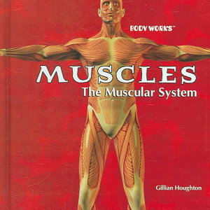 Muscles  The Muscular System PDF