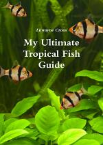 My Ultimate Tropical Fish Guide