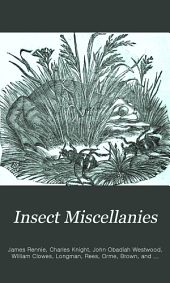 Insect Miscellanies..