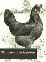 Standard-bred Leghorns
