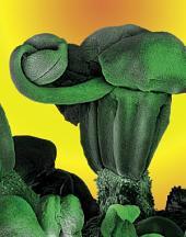 Garten- und Heilkräuter – Magie des Mikrokosmos