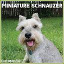 Miniature Schnauzer Calendar 2021