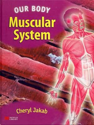Muscular System PDF