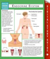 Endocrine System (Speedy Study Guides)