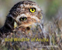 Bird Wildlife of Aruba