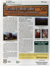 Bark Beetles in California Conifers PDF