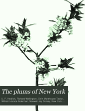 The plums of New York