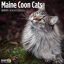 2021 Maine Coon Cats Wall Calendar PDF