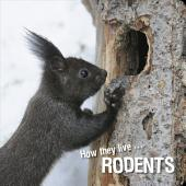 How they live... Rodents: Learn All There Is to Know About These Animals!