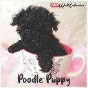 Poodle Puppy 2021 Wall Calendar