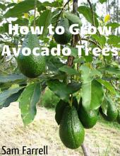 How to Grow Avocado Trees