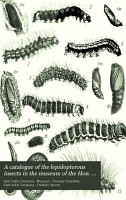 A Catalogue of the Lepidopterous Insects in the Museum of the Hon  East India Company PDF