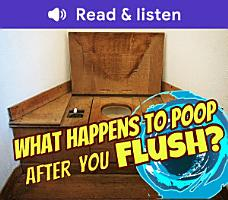 What Happens to Poop After You Flush  PDF