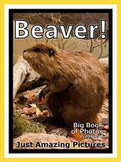 Just Beavers! vol. 1: Big Book of Photographs & Beaver Pictures