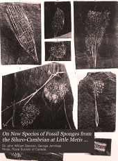 On New Species of Fossil Sponges from the Siluro-Cambrian at Little Metis on the Lower St. Lawrence