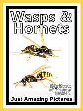 Just Wasps & Hornets Insects! vol. 1: Big Book of Wasp & Hornet Insect Photographs & Pictures