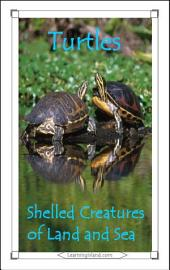 Turtles: Shelled Creatures of Land and Sea: A 15-Minute Book