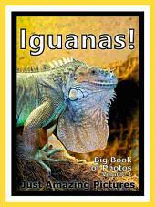 Just Iguanas! vol. 1: Big Book of Iguana Lizard Photographs & Pictures