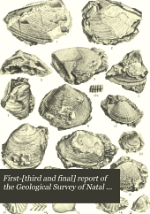 First-[third and Final] Report of the Geological Survey of Natal and Zululand: Volume 2