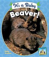 It's a Baby Beaver