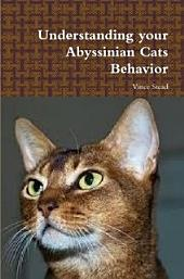 Understanding your Abyssinian Cats Behavior