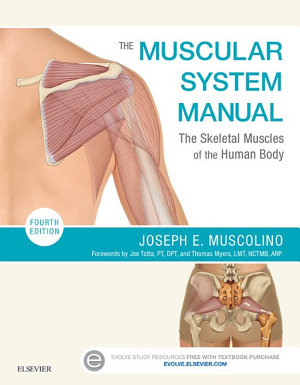 The Muscular System Manual   E Book PDF