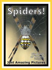 Just Spiders! vol. 1: Big Book of Insect Spider Insects Photographs & Pictures