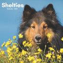 Shelties Calendar 2021