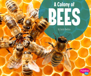 A Colony of Bees PDF