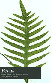 Ferns: Polypodium, Struthiopteris, Nevrodium, Hymenolepis, Vittaria, Ceratopteris