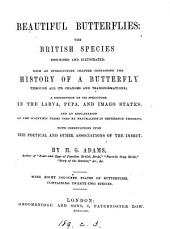 Beautiful butterflies; the British species described and illustrated