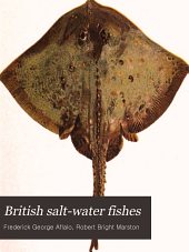 British Saltwater Fish
