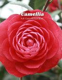 Camellia Full-Color Picture Book