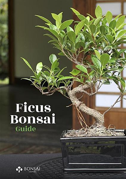 Ficus Bonsai Guide