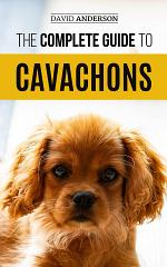The Complete Guide to Cavachons