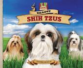 Shaggy Shih Tzus