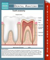 Dental Anatomy (Speedy Study Guides)