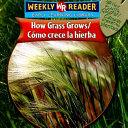 How Grass Grows  Como Crece La Hierba  PDF
