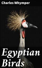 Egyptian Birds