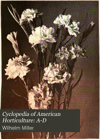 Cyclopedia of American Horticulture  A D