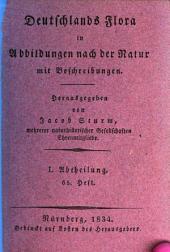 Deutschlands Flora: in Abbildungen nach der Natur mit Beschreibungen. ¬Abt. ¬I., Phanerogamen ; H. 65, Band 1,Ausgabe 65